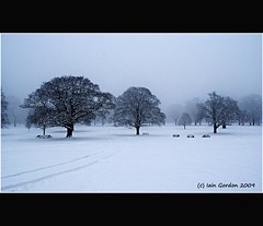 Tranquil Winter Beauty - Dundee - Scotland (Magdalen Green Photography) Tags: trees winter snow nature scotland cool silent dundee scottish mysterious benches tayside camperdownpark dundeecity cityofdundee calmnaturescene iaingordon tranquilwinterbeauty picturesofdundee dundeephotography imagesofdundee dundeestockphotography printsofdundee
