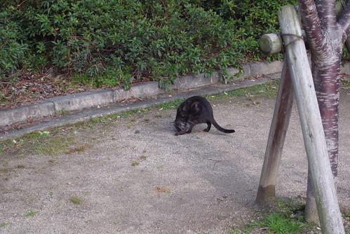 Today's Cat@2009024