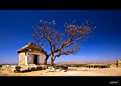 A happy ending (Explored) (saternal) Tags: tree temple happy hampi ending saternal