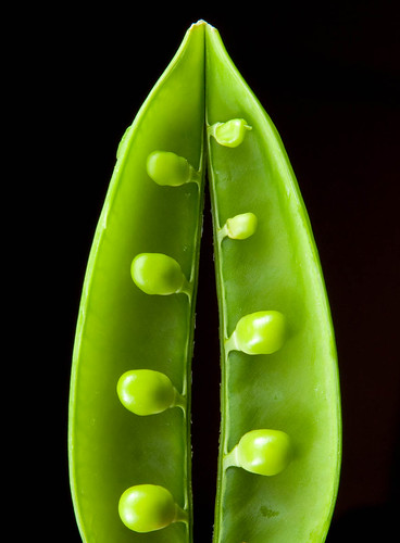 macro photograph green pea pod vegetable