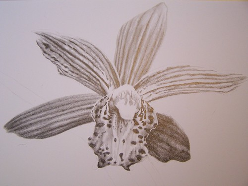 Orchid in Pencil 1
