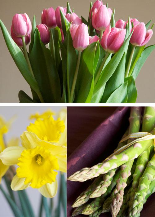 Spring Fever Montage