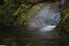 Magic pond (_madmarx_) Tags: wood verde rio stone agua rasbaixas galicia pedra pontevedra outono riasbaixas xsi piedra auga morrazo moaa sinretocar canoneos450d afraga madmarx
