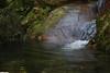 Magic pond (_madmarx_) Tags: wood verde rio stone agua ríasbaixas galicia pedra pontevedra outono riasbaixas xsi piedra auga morrazo moaña sinretocar canoneos450d afraga madmarx