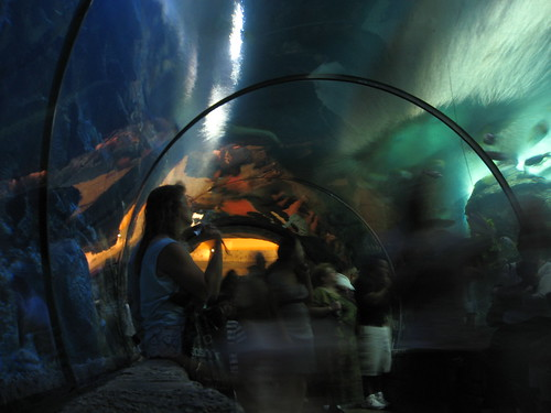 aquarium lasvegas nevada clark thestrip mandalaybay sharkreef