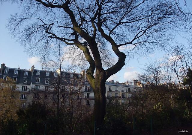 Cette photo, prise en hiver, montre malgré tout la majesté de cet arbre, même sans ses feuilles