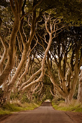 The Dark Hedges (centrax) Tags: road trees ireland silver dark country haunted birch witches northern hedges antrim the bregagh