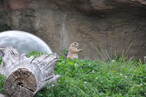 Zoo 012