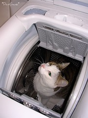 Fusillo and the new washing-machine... (*DaniGanz*) Tags: cat kitty washingmachine gatto kittie micio lavatrice fusillo daniganz