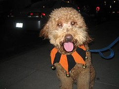 Halloween (dcstriving) Tags: artie
