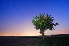 My Tree During The Perseid Meteor Shower (Philipp Klinger Photography) Tags: blue shadow summer sky orange tree nature field night rural germany stars landscape shower deutschland star nikon europe long exposure hessen nocturnal angle horizon flash wide bad august stern philipp sigma1224mm meteor sterne hesse sternschnuppe nauheim badnauheim klinger wetterau perseid perseids perseiden meteorit d700 dcdead vanagram meteoriten wisselsheim nearlygettingbittenbyadogididntevenseeinthedark