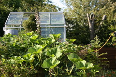 Greenhouse and squash