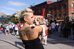 Beagle bulldog pup (moments4me Photography ... photos to remember by) Tags: beagle tattoo puppy bulldog