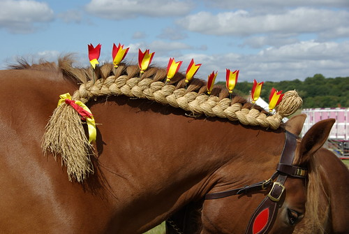 Traditional Heavy Horse Plaiting