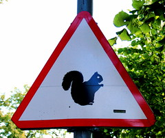 Squirrel Alert!!! (Brian Aslak) Tags: animal sign squirrel europe tallinn estonia orava warningsign eesti estland ekorn kadriorg orav estija igaunija
