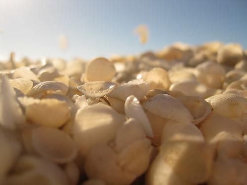 Shell Beach, Australia