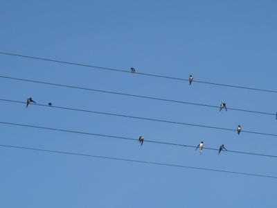 birdmusic3