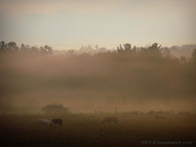 P1060796_horses