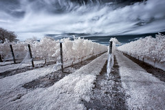 Vineyard (vintod) Tags: blue trees horses bw horse cloud baby white snow black cold tree cute love ice nature sunglasses animal sepia clouds barn fence ir island person glasses vineyard vines infant long child carriage brother farm country north goat vine fork winery crop grapes infrared crops icy grape tone hdr wineries tonemapped tonemapping tonemap