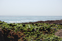 tidepool14 (timwinter79) Tags: range tidepools tidepool tidal sanpedrotidepools