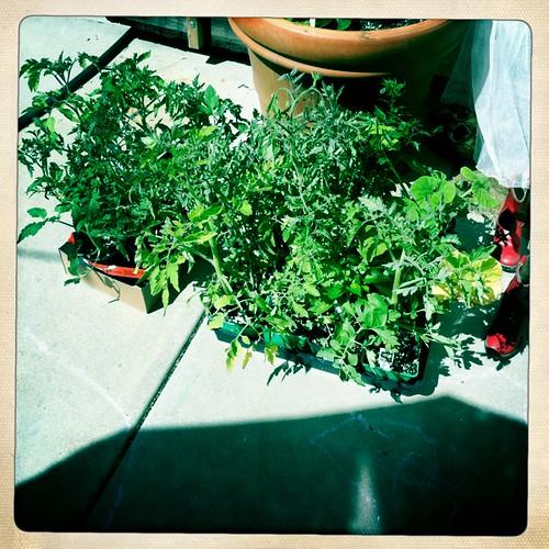 gardening on hipstamatic