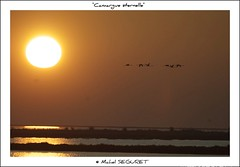 Camargue ternelle (Michel Seguret) Tags: voyage trip travel viaje fab france color macro verde green nature colors closeup landscape fun nikon colorful couleurs postcard tripod delta vert paca sensational provence grn fabulous iq 13 paysage atm colori viaggio shiningstar naturesbest camargue rhone smrgsbord cartepostale fiatlux wonderfulnature bouchesdurhone nikond200 thinkgreen kartpostal amazingcapture bestmoment diamondheart francelandscapes diamondstars thisphotorocks goldwildlife internationalgeographic thebestmoment thebestofday gnneniyisi arealgem thebestoftheday checkoutmynewpics gnnenlyisi colourvisions rubyphotographer photographersgonewild flickrverte naturallymagnificent grouptripod flickrpopularphotographer croquenature excelenceofphotographer artofimages excelenceofphotographeraward diamondphotographersclub favoritetravel favoritelandscape michelseguret