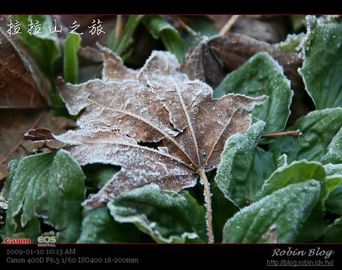 你拍攝的 20090110數位攝影_拉拉山外拍035.jpg。