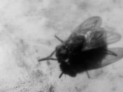 flyon camera. Evidence T-18874-B