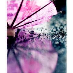 """Clouds come floating into my life, no longer to carry rain or usher storm, but to add color to my sunset sky."" (mjmatt) Tags: pink reflection rain umbrella bokeh ppt 100mmmacro"