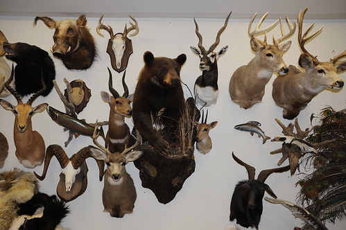 taxidermist_4291 web