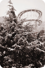 Let It Snow (jami_lee) Tags: bw snow tree coneyisland roller snowing coaster cyclone