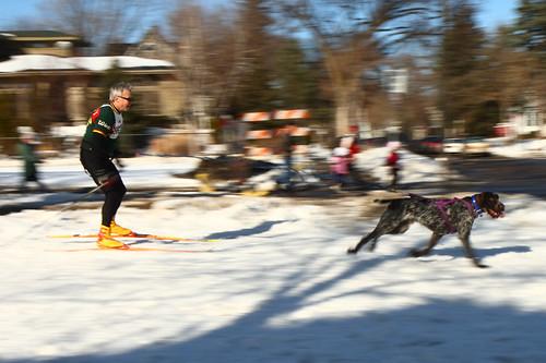 Skijoring Loppet 8796