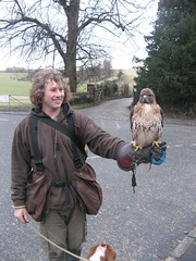 Fanny the Redtail