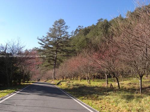你拍攝的 1櫻花步道。