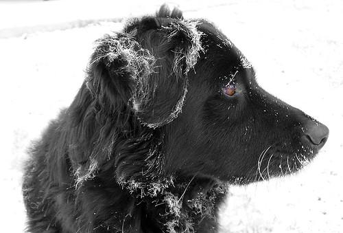 Frosty Liv