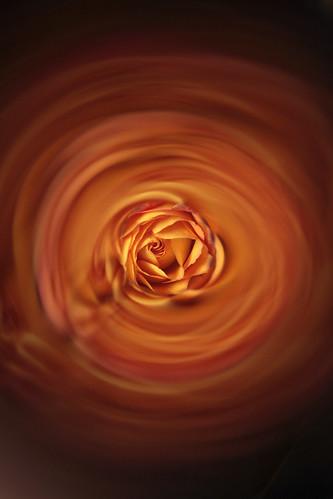 Roses 34