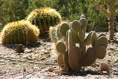 Phoenix Zoo Foliage
