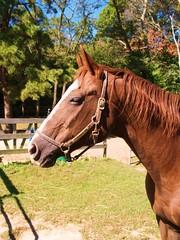 PP1012352_205 (J McLaughlin) Tags: horse quarterhorse raider threebars