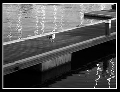 On the runaway... (petitillusion) Tags: bw seagulls portugal birds marina spring oeiras ilustrarportugal serieouro