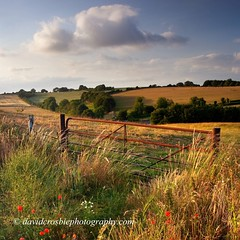 Cranborne Chase, Dorset - Summer Evening (David Crosbie) Tags: summer rural evening gate dorset poppy poppies fields wildflowers cranbornechase fbdg spiritofphotography sailsevenseas