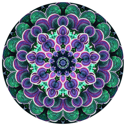 figure 11 Woodland_fairylodge_600A contemporary mandala made from a photograph of tree fungus