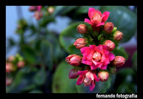 E mais Flores