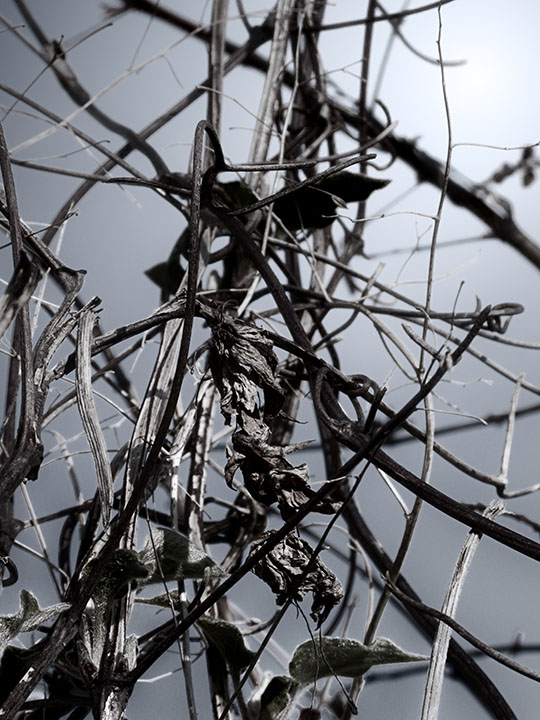 Photography - Twigs by Nicholas M Vivian