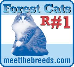 cat breed