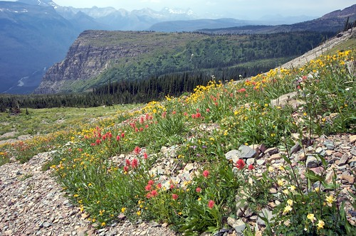 Highline Trail -- Glacier National Park