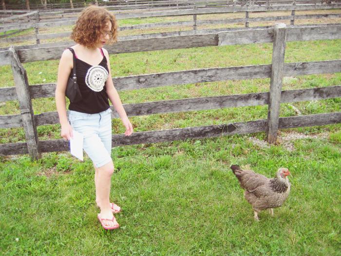 following a chicken