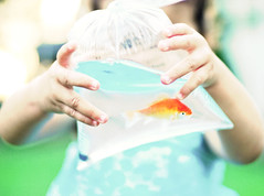Chance is always powerful. Let your hook always be cast; in the pool where you least expect it, there will be fish. (Kelly West Mars) Tags: blue summer portrait baby fish green 50mm hands whimsy toddler colorful child goldfish bokeh f14 fingers naturallight winner prize nikond80 chesterfieldcountyfair florabellatextures