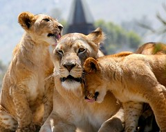 Family (Don Baird) Tags: searchthebest asma specanimal specanimals vosplusbellesphotos