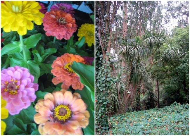 gardenspiration3