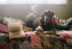 (Tommy Petroni) Tags: stella dog vintage reading bed quilt relaxing books burning smell blanket incense